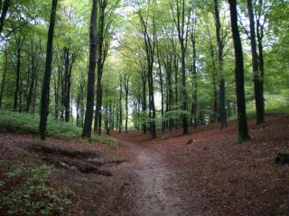 Mini Camping Het Wielseveld Betuwe Natuur