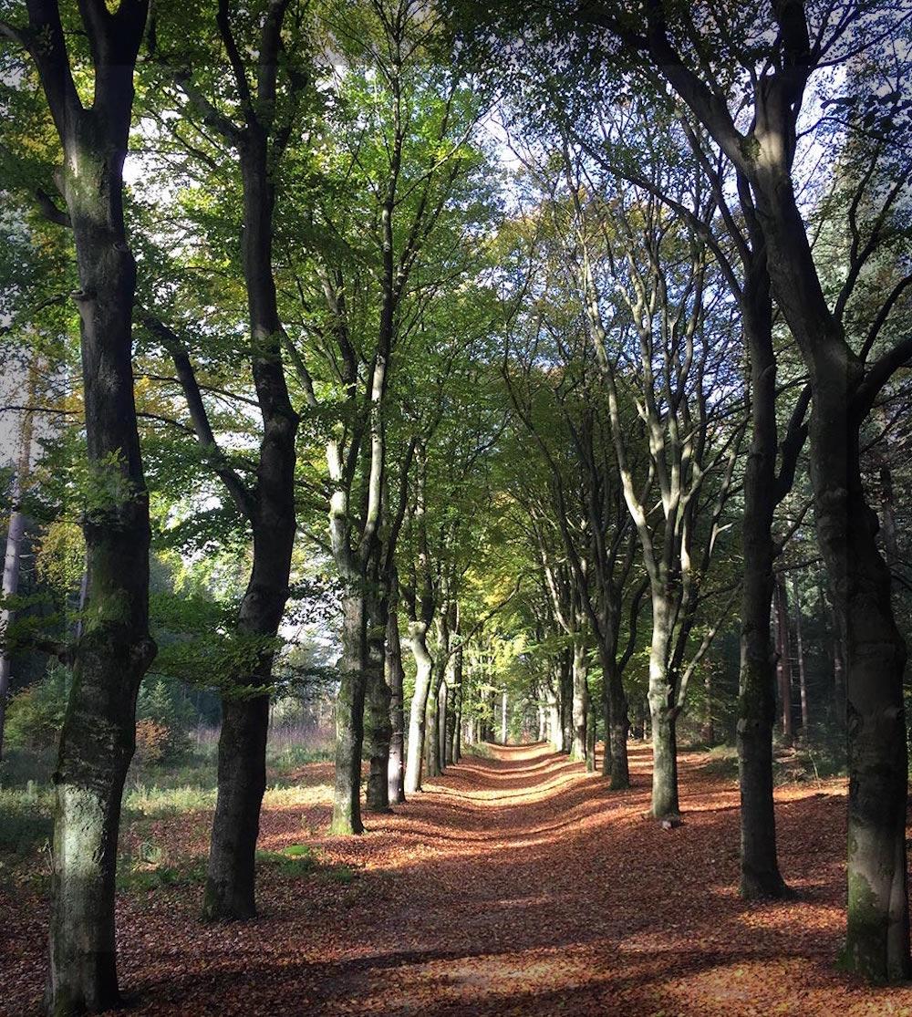 Mini-Camping Het Wielseveld Betuwe UtrechtseHeuvelrug Herfst