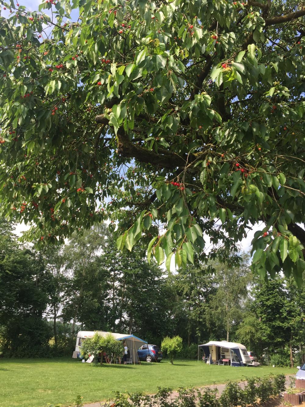 Mini-Camping Het Wielseveld Betuwe Nieuws Kersen